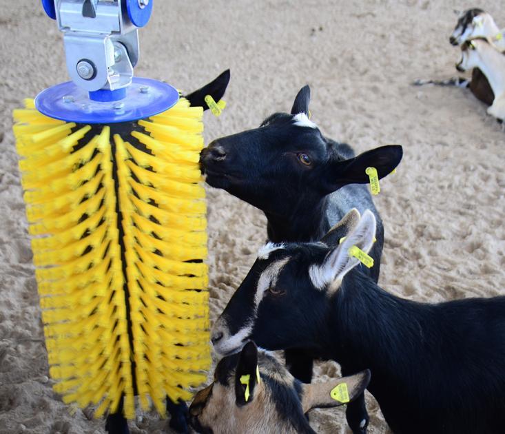 Tecnoparque caprino realiza primer envío de leche a Sigma Alimentos