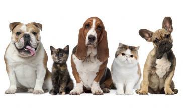 Esterilizacion Canina y Felina