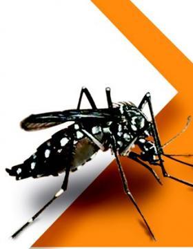 Medidas preventivas por zika